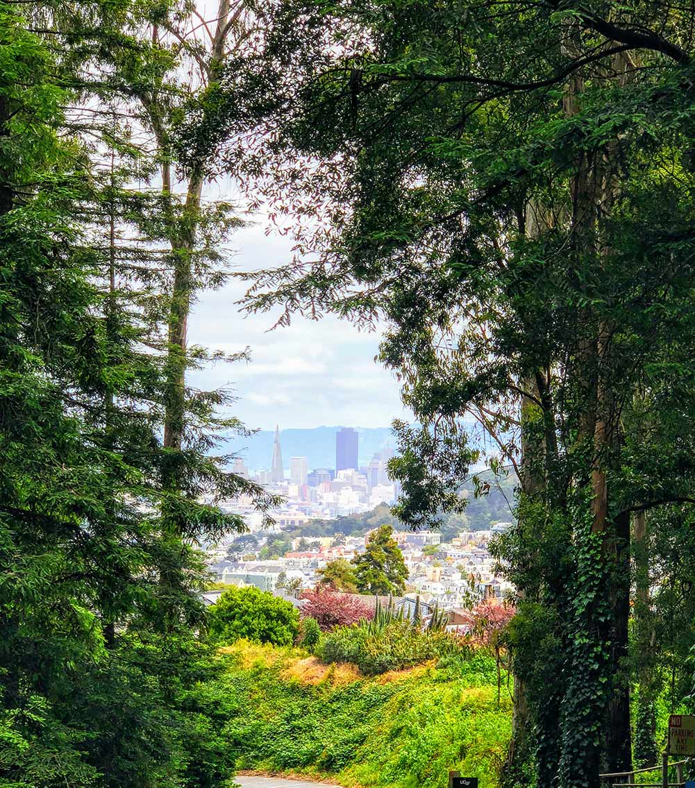 View Towards Downtown from Mt. Sutro Open Space