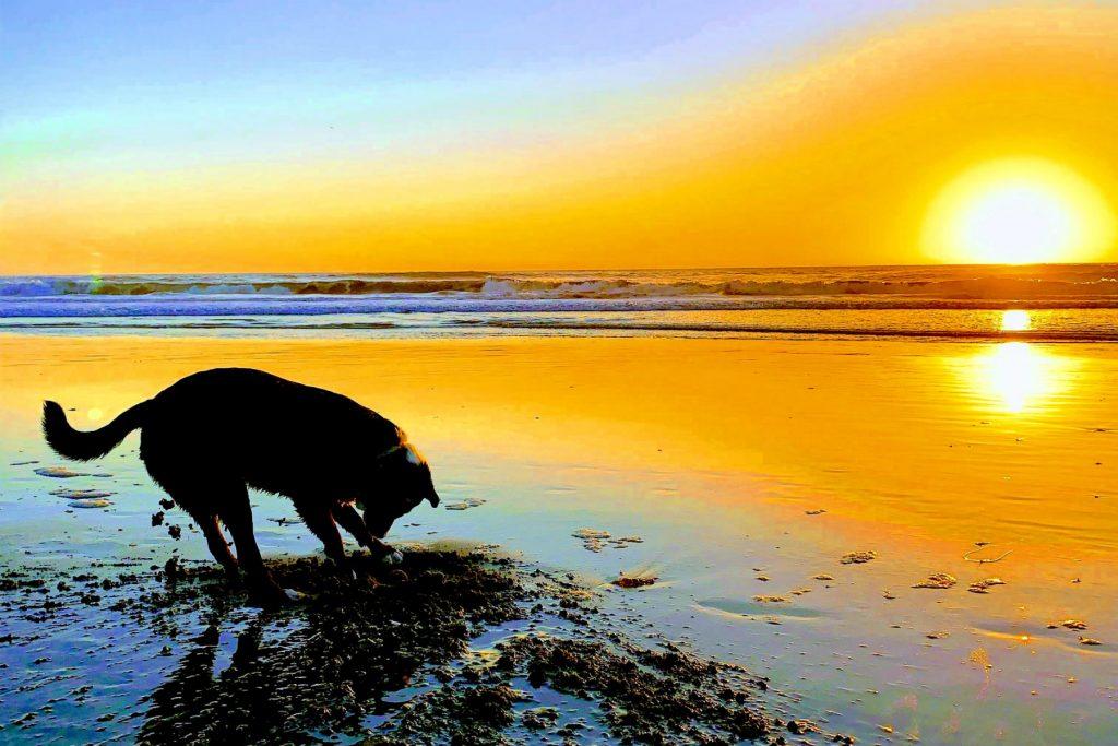 Dog digs in Sand Outer Sunset Jackson Fuller Real Estate